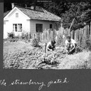 Norma, Jack and Joe the cat in the strawberry patch outside house in Glenwood. Glenwood, California c.1954.